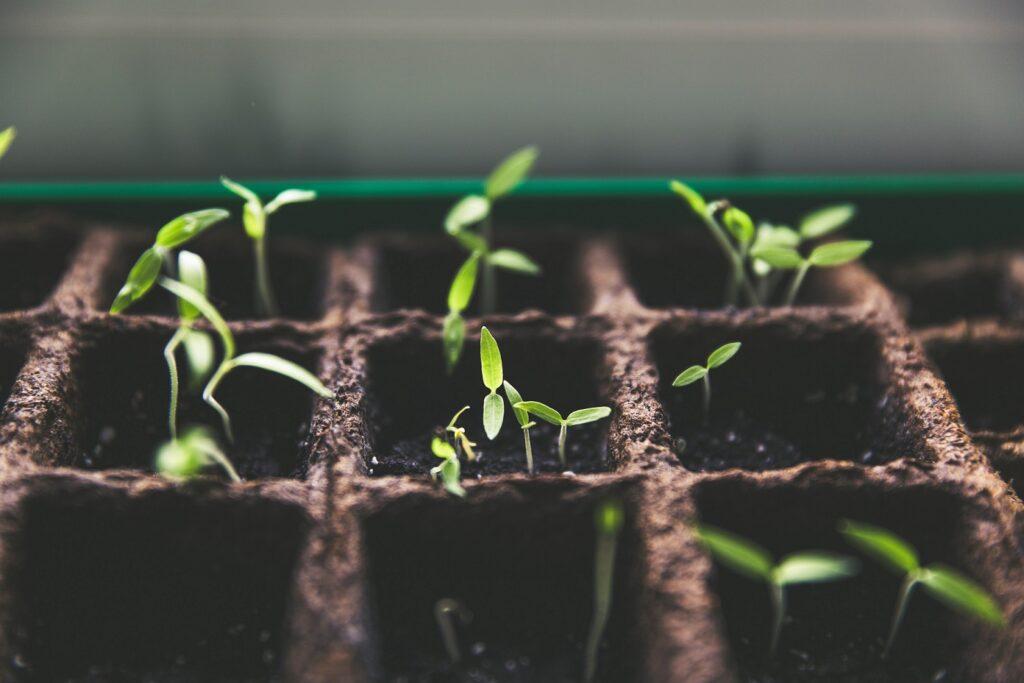 costruttori-giardinieri-coelho-officina